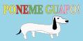 Peluqueria Canina Poneme Guapo