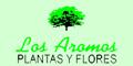 Plantas y Flores los Aromos