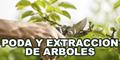 Poda y Extraccion de Arboles