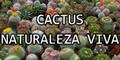 Cactus - Naturaleza Viva